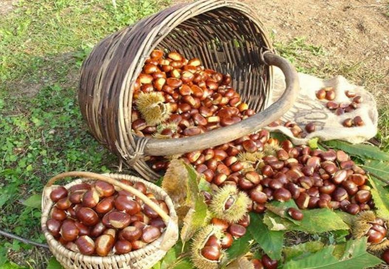 prodotti del territorio Marroni del Monfenera