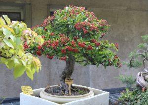 Tarzo-Giardino Museo Bonsai della Serenità